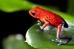 Жаби вдъхновили технология против заледяване на самолетни крила