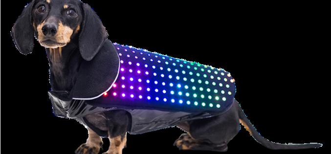 Диско куче с контрол през смартфона