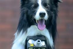 Nikon позволи на кучетата да правят собствени фотографии