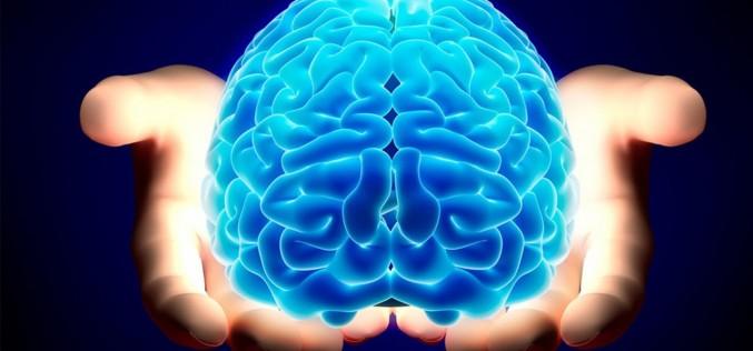 Механизмът на мозъка за трайно запомняне
