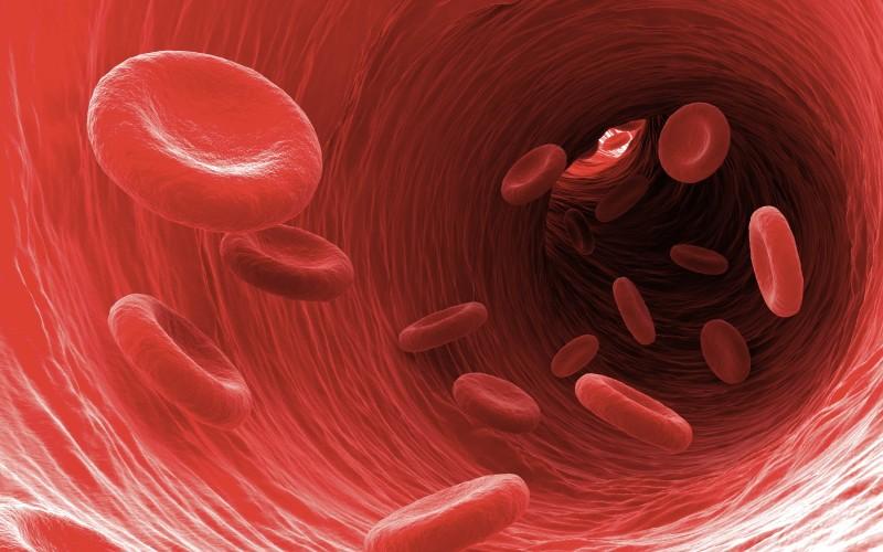 Човешката кръв не се образува както пише в учебниците, казват изследователи на стволови клетки