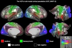 Най-подробната карта на човешкия мозък