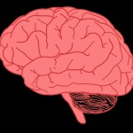 picture of brain clipart picture of brain clipart free to use amp public domain brain clip art 742 X 633