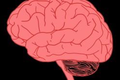 Препрограмиране на мозъка преодолява страхови неврози
