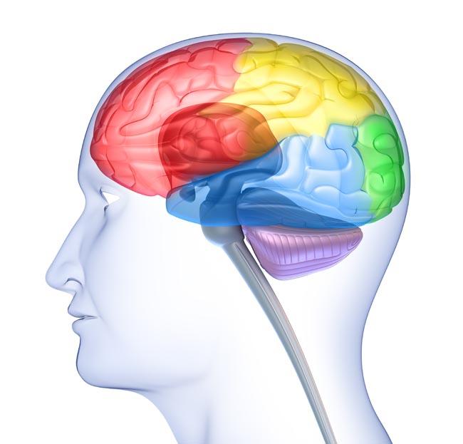 brain-and-senses