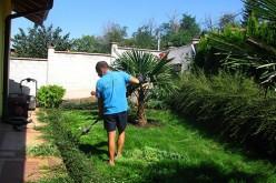 3 важни стъпки, които да следваме при озеленяване